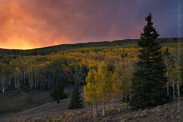 Stormy sunset and fall aspens, Cruces Basin Wilderness, New Mexico